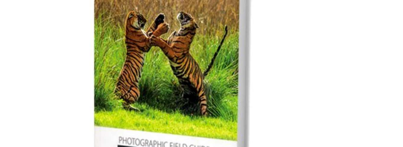 A Comprehensive Guide to Wildlife Photography in India