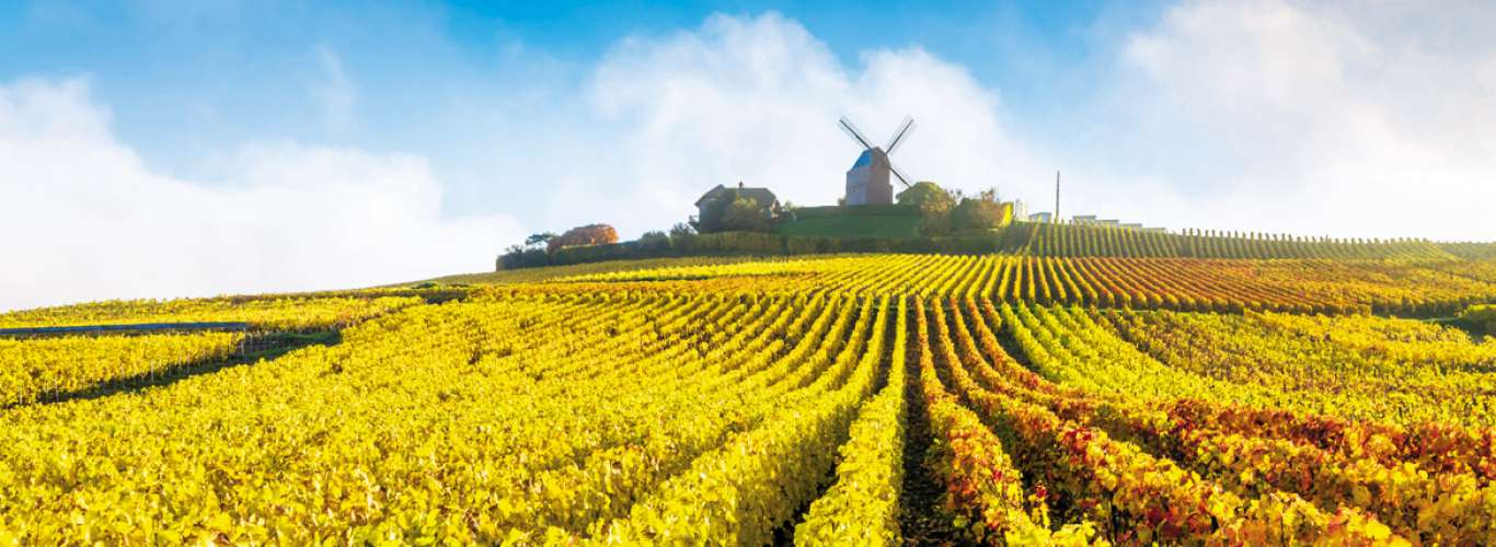 Champagne: A Sparkling Journey