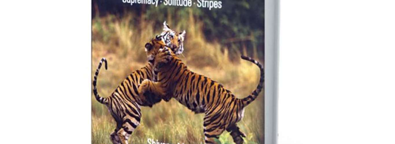 Book Review: A Decade with Tigers