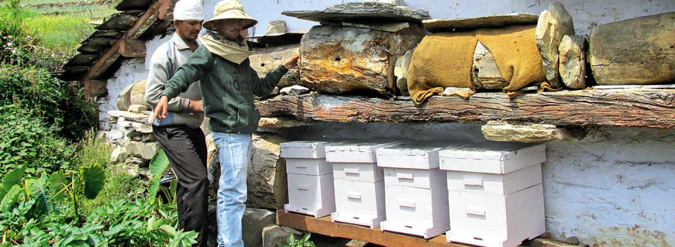 Devalsari: Home of the bees and the butterflies