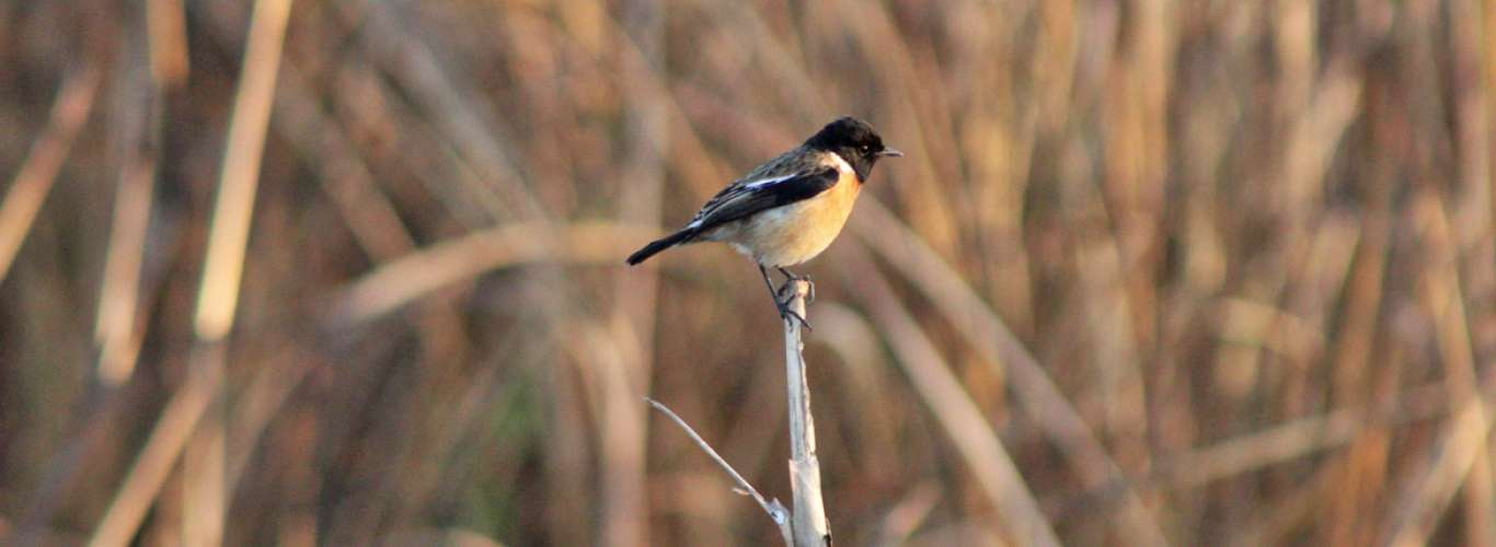 5 birds you can't miss when in Dudhwa National Park