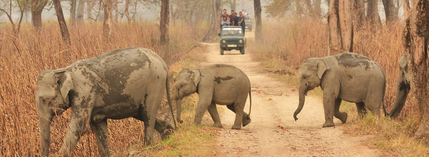 Top five National Parks in Assam for an unforgettable wildlife experience