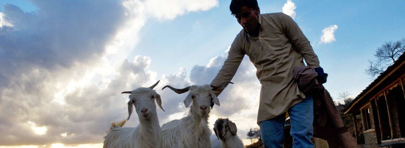 The Goat Village: A Responsible Escape To An Animal Farm