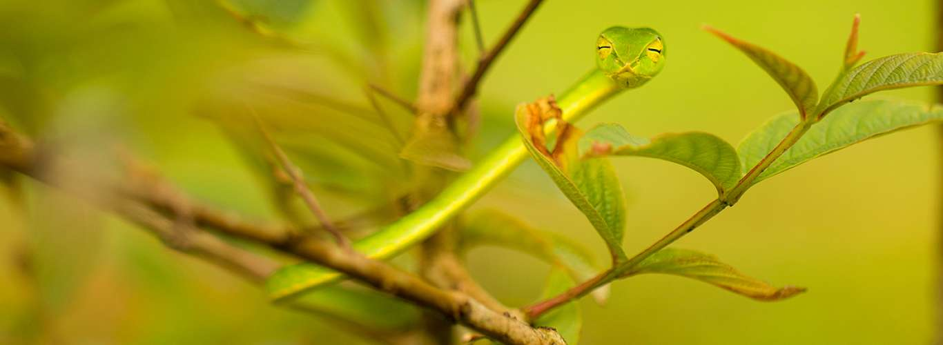 For the Love of Herping in the Western Ghats