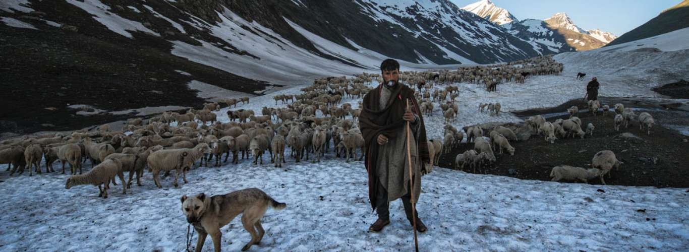 A Glimpse into the life of Bakarwal Nomads