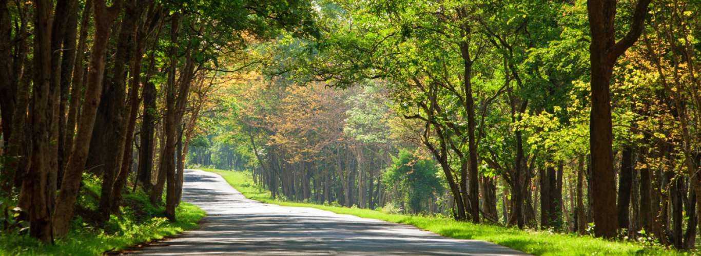 National Parks In India That Stay Open During The Monsoon