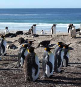 Did You Know About This Penguin Paradise near Argentina?