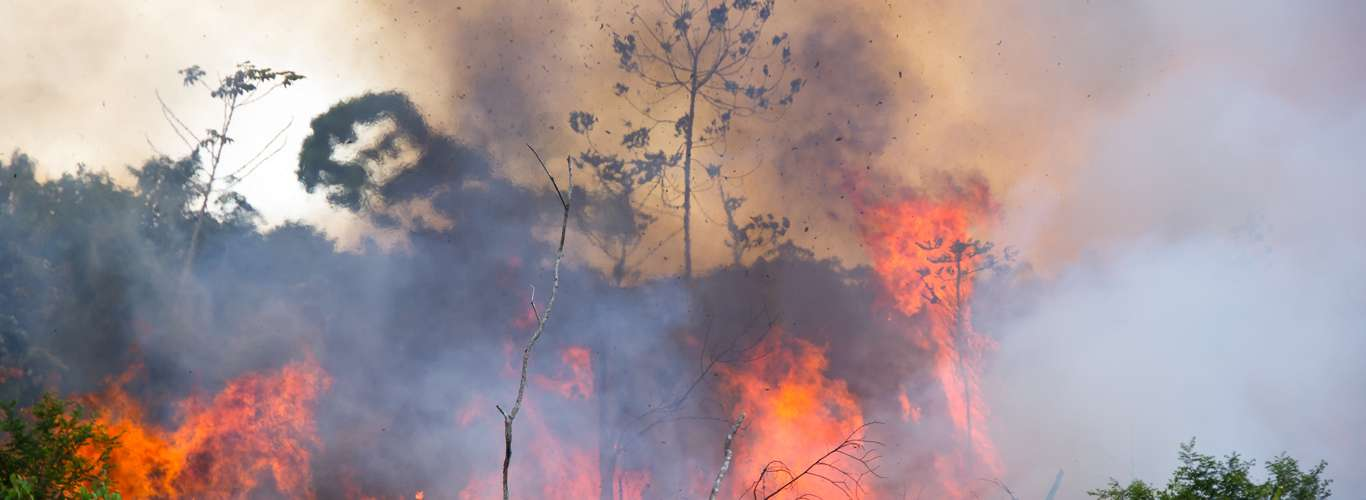 The Amazon Rainforest Is Burning: What Does It Mean For The World