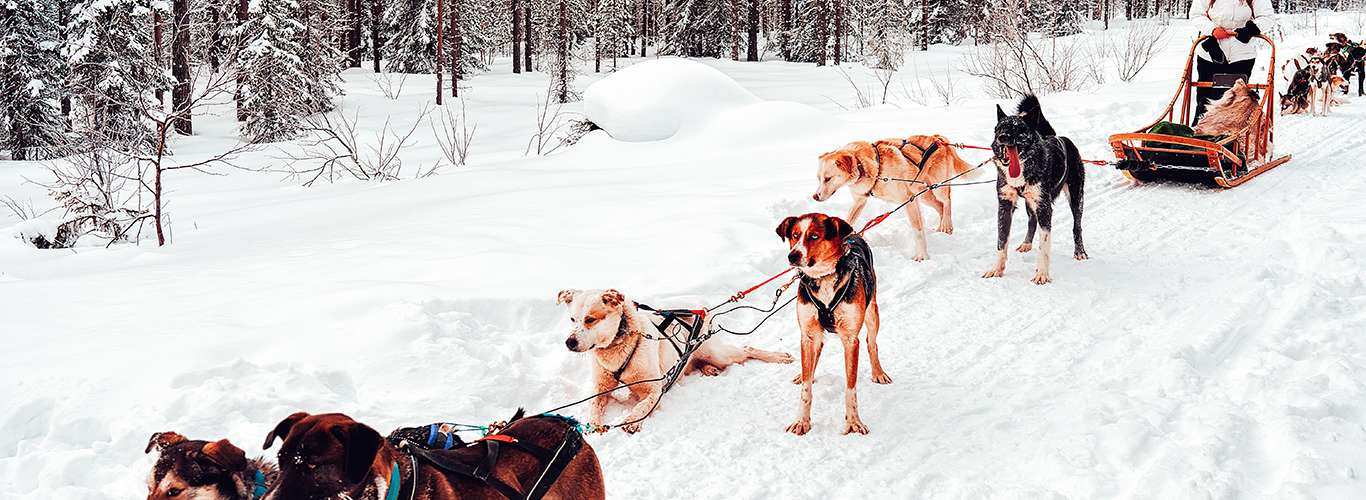 Unusual Winter Sports That You Must Try