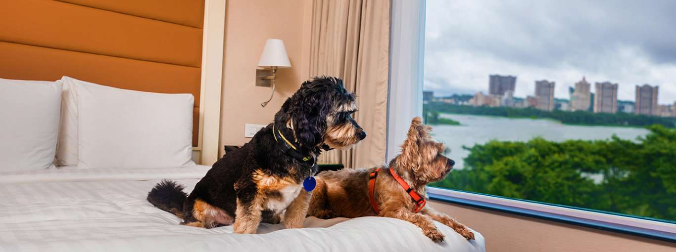 8 Pet-Friendly Stays Across India for a Vacay with Your Furry Friends