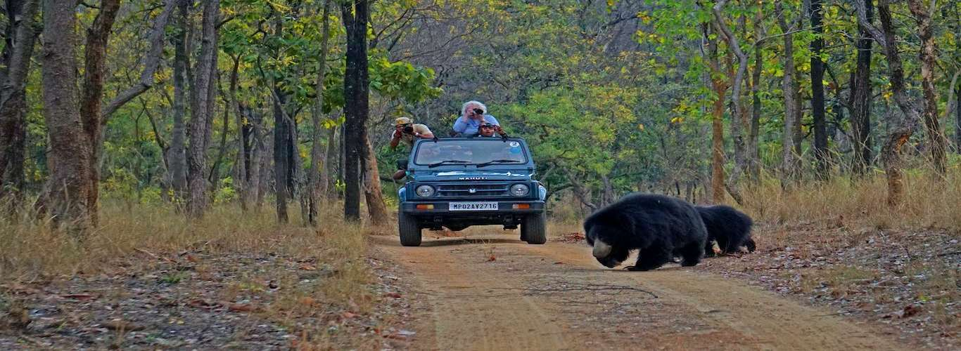 Responsible Wildlife Tourism As a Conservation Tool