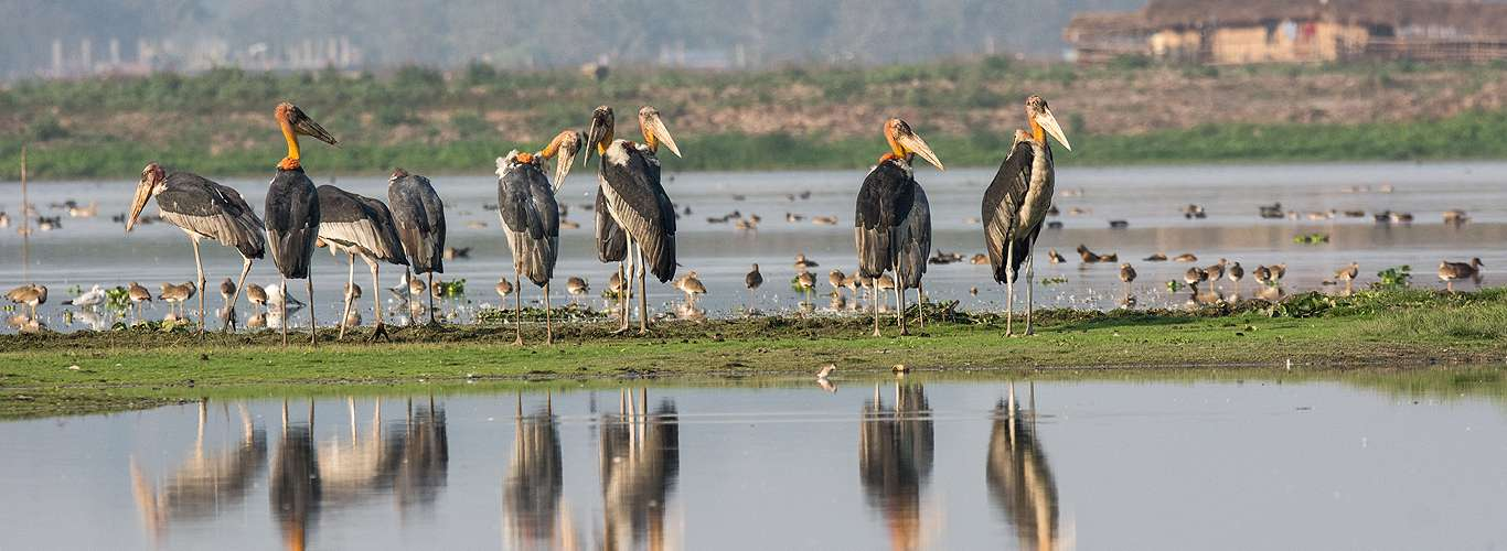Fantastic Birds And Where To Find Them In India