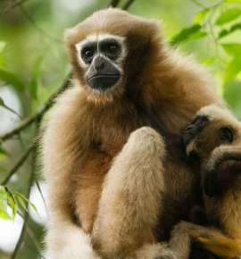 Did You Know About This Primate Playground In Assam?