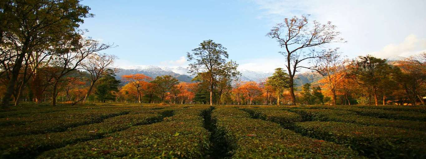 Of Tea and Pottery in Himachal Pradesh