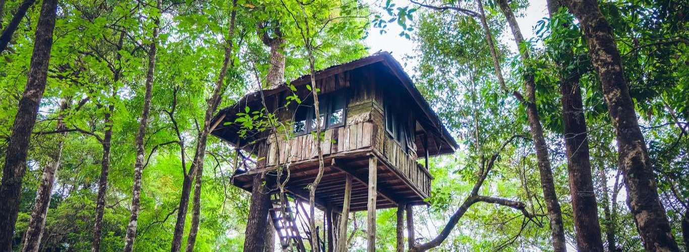 6 Treehouses to Isolate in Right Now