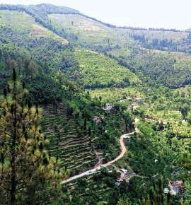 Of Fruit Bowls and Literary Giants in Kumaon