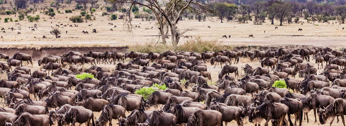 6 National Parks In Tanzania For The Wildlife Explorer In You