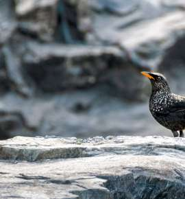 A Day Out Birding in Uttarakhand