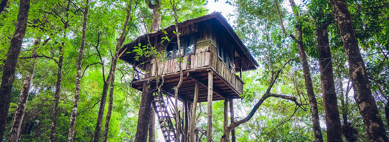 Did Somebody Say Treehouse?