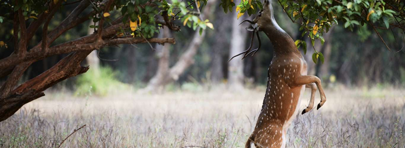 How To Be A Responsible Wildlife Tourist