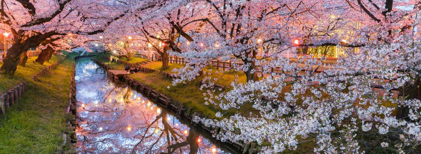 So You Want To See Cherry Blossoms…
