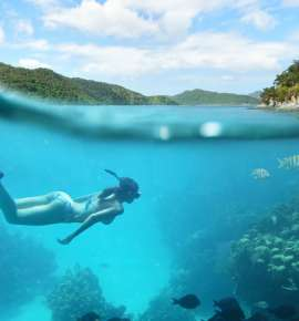 Unique Underwater Attractions For Fans of the Marine