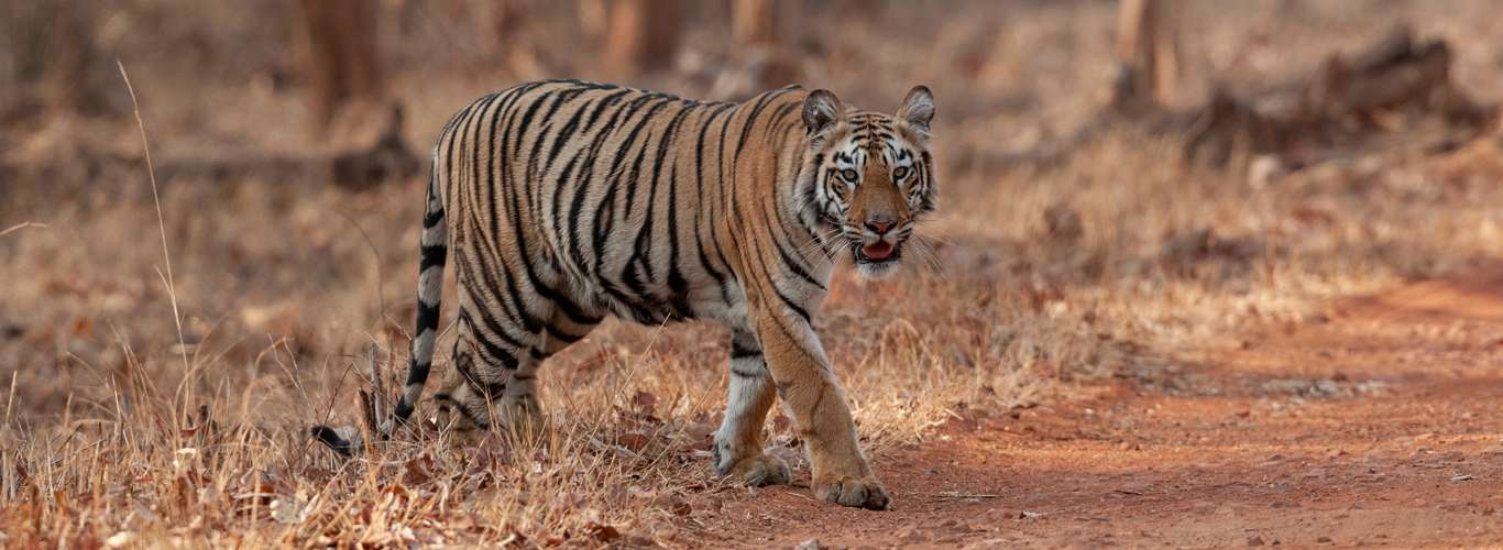 Here's Your Wildlife Weekend Getaway Guide From Nagpur
