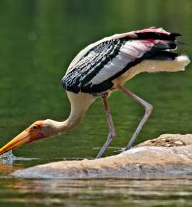 Paradise of Wings: Bird Watching Sites in India For Every Birder