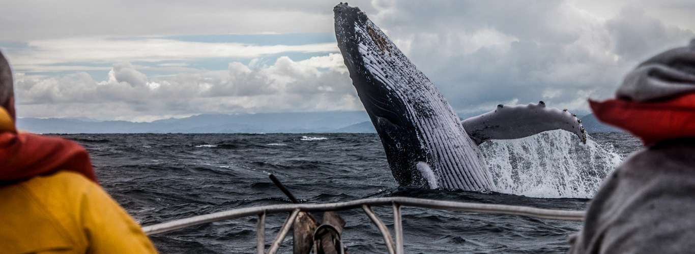 Marine Sightings You Whale Not be Able to Resist