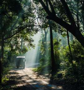 Go Beyond The Tiger Trail At India's Oldest National Park