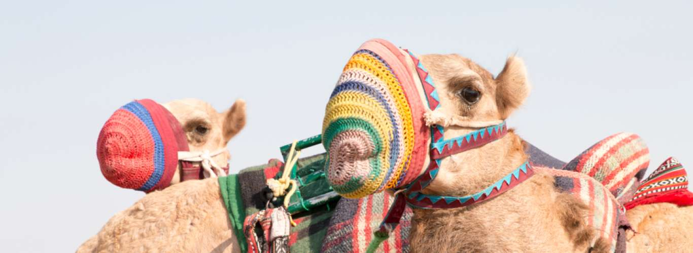 What To Do On Your Stopover In Doha