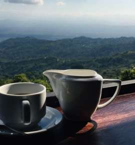 Feeling Brew? Go for Some Coffee in the Hills