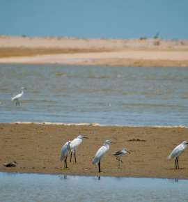 The Best of Odisha's Beaches - Part 1