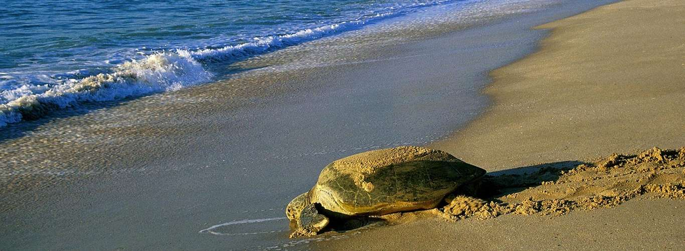 Turtles All The Way Down, Arabian Leopards & Other Secrets From Oman