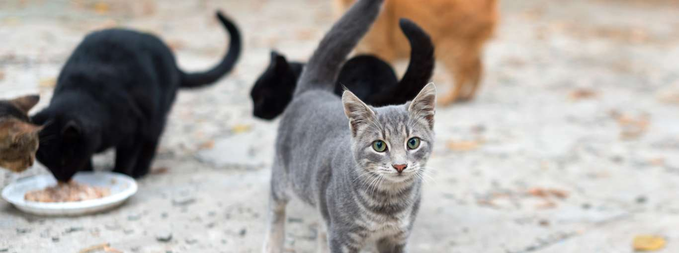 Street Cats of the World: A Pawsitive Relationship