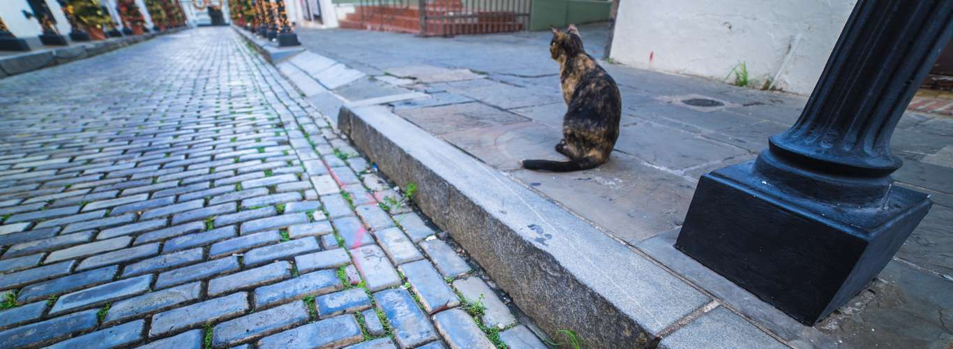 In the Footsteps of the Felines: San Juan Like a Local