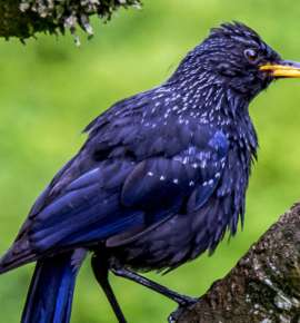 The Best Places to See Sikkim's Birds