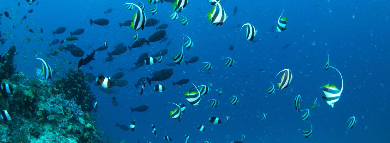Experience Marine Life in India
