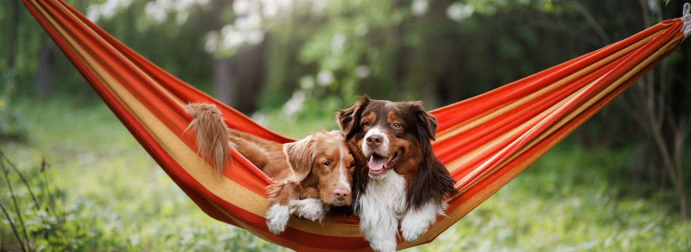 10 Pet Friendly Stays Across India for Every Budget