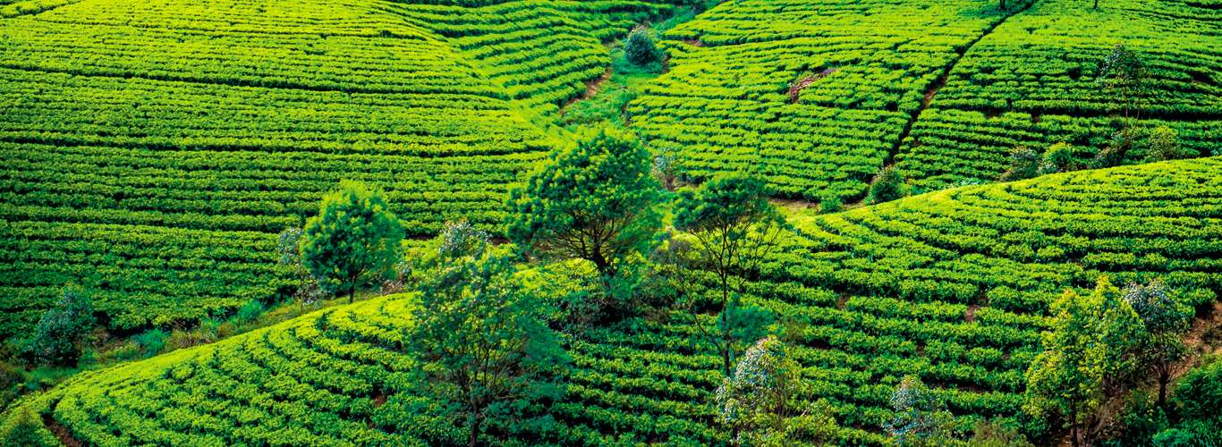 A Grand Escape into the Bewitching Hills of Sri Lanka