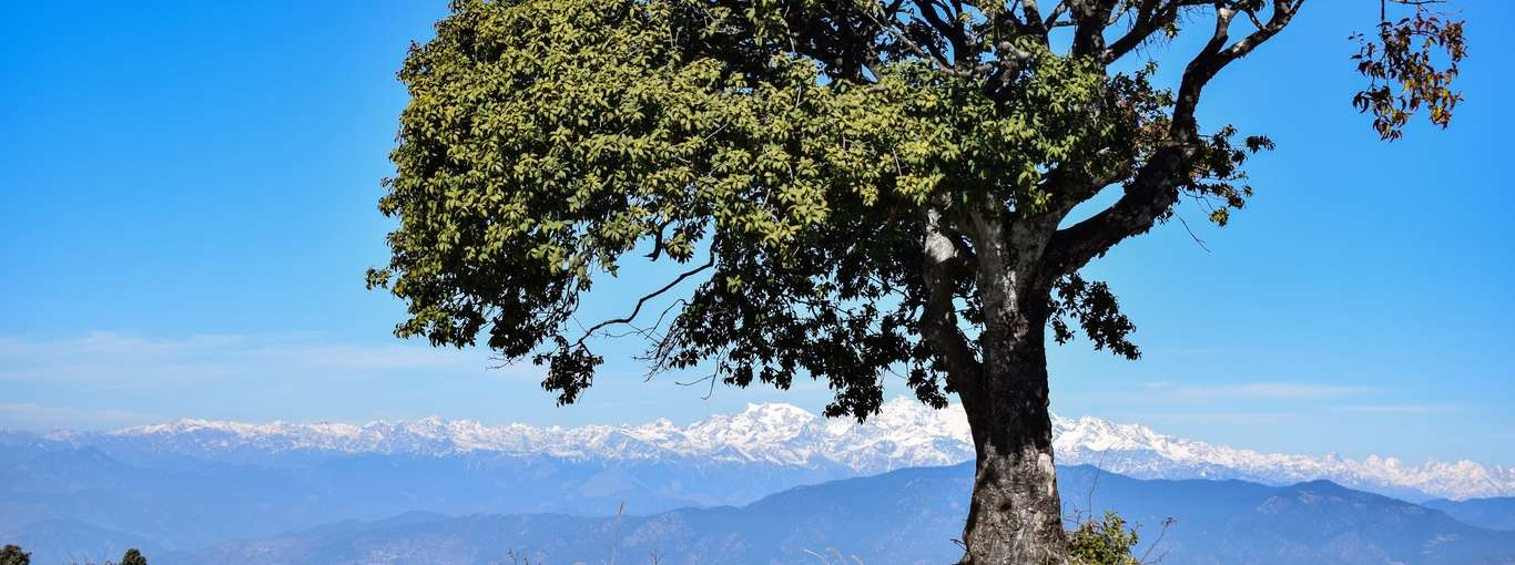 Think Mussoorie's Too Crowded? Pick Kanatal Instead