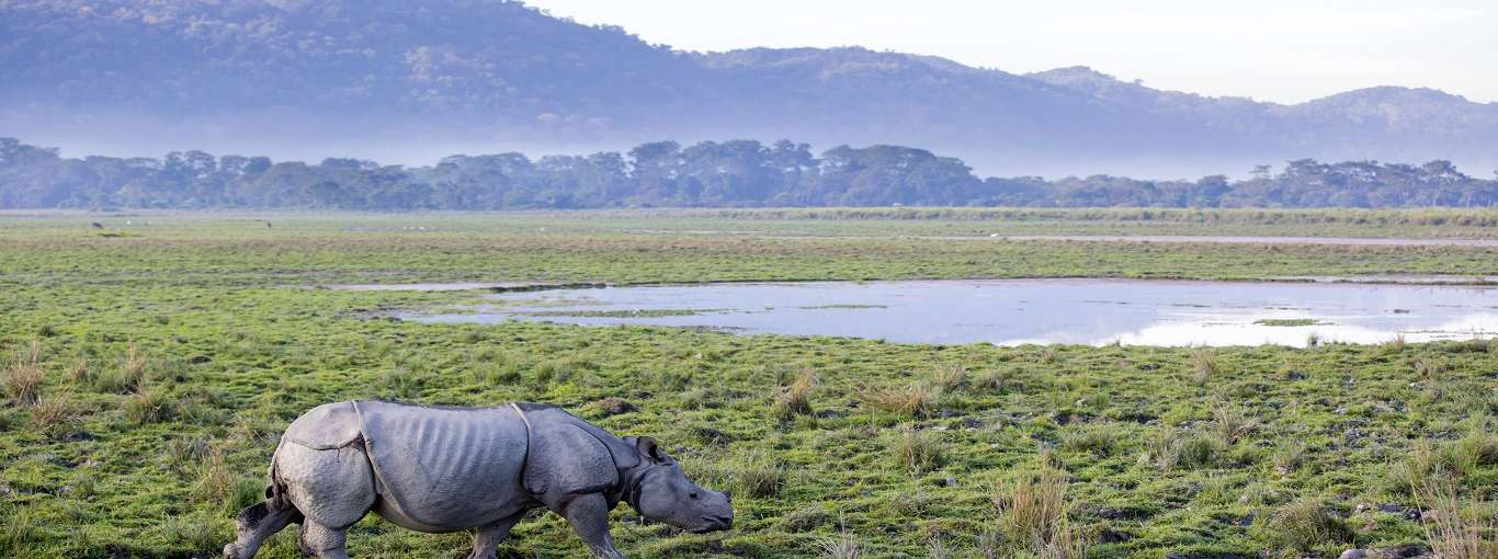 10 Epic Safaris To Try In 2020