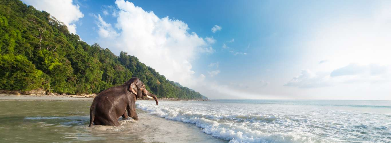 5 Natural Nuggets Found in the Andaman and Nicobar Islands
