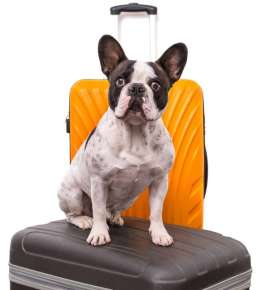 Plan The Pawfect Trip With These 5 Tips