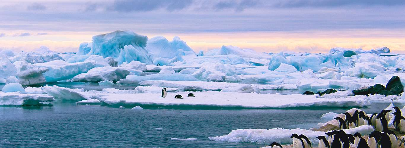 Did You Know About Antarctica in New Zealand?