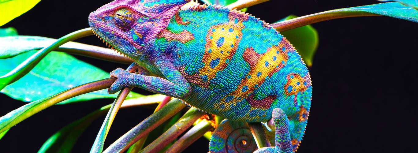 5 Reasons to Watch David Attenborough's Life in Colour