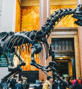 A Museum Bucket List For The Geek In You: New York Edition