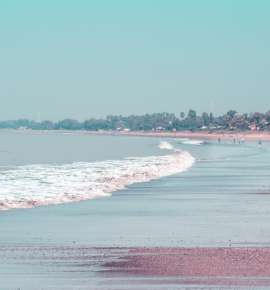 Have You Been to Dahanu Yet? Here's Why You Should Go