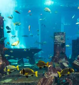 Bucket List Series: Underwater Dining