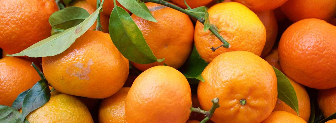 This Manipur Village is Home to a Very Rare Variety of Citrus